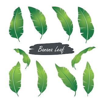 Colección de hojas de plátano aislado en blanco
