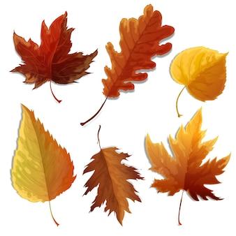 Colección de hojas realistas