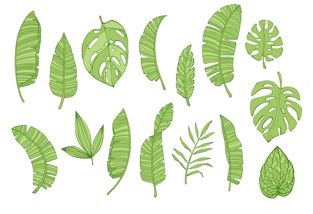 Colección de hojas tropicales, conjunto de elementos florales tropicales.