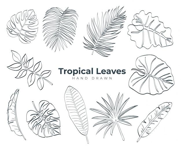 Colección de hojas tropicales dibujadas a mano