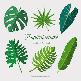 Colección de hojas tropicales en diseño plano