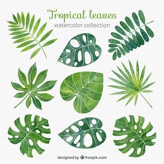 Colección de hojas tropicales en estilo acuarela