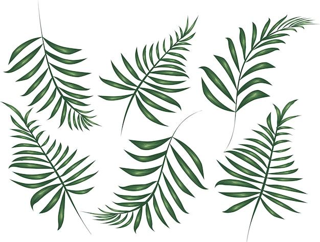 Colección de hojas verdes