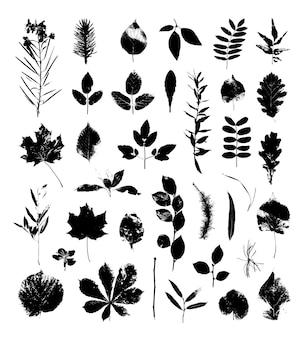 Colección de hojas