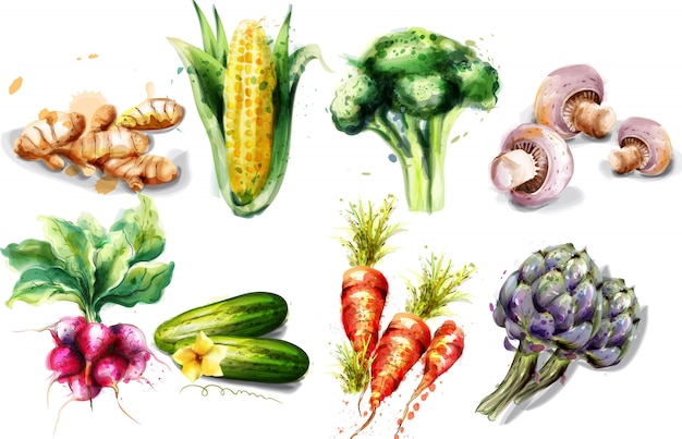 Colección de hortalizas acuarela.