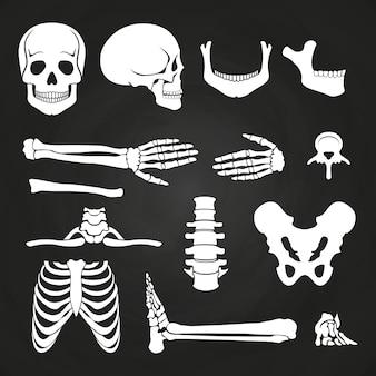 Colección de huesos humanos en pizarra.