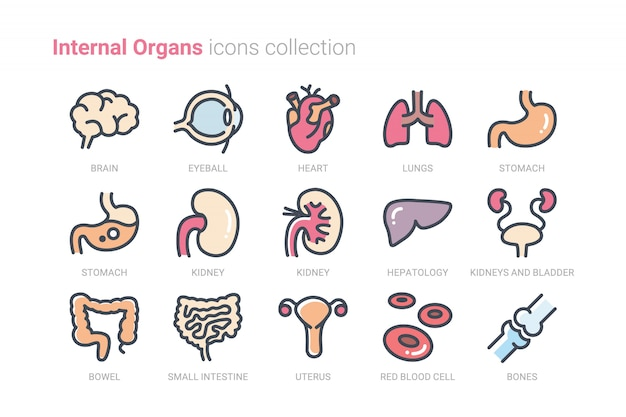 Colección de iconos de órganos internos