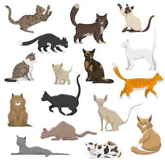 Colección de iconos planos de razas de gatos domésticos