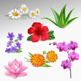 Colección de iconos realistas de plantas de flores.