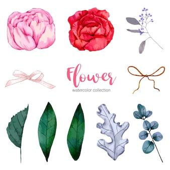 Colección de ilustración acuarela hermosa flor