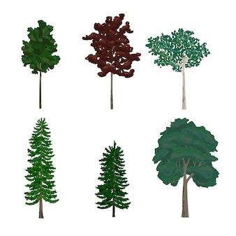 Colección de ilustraciones de árboles de hoja y pino