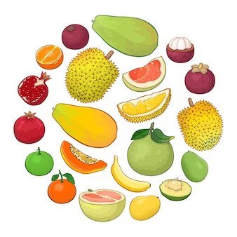 Colección de ilustraciones de frutas tropicales
