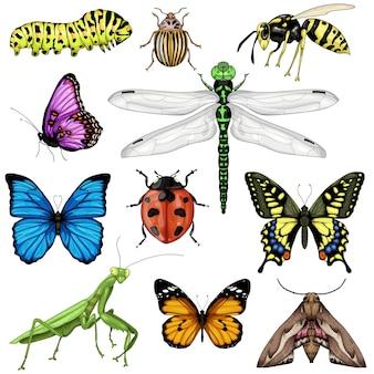 Colección de ilustraciones de insectos aislados sobre fondo blanco.