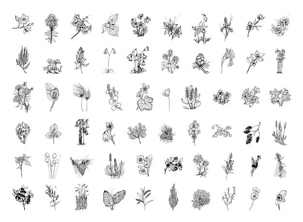 Colección de ilustraciones monocromas de plantas nórdicas en estilo boceto