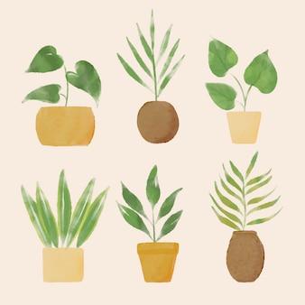 Colección ilustrada de plantas de interior pintadas a mano.