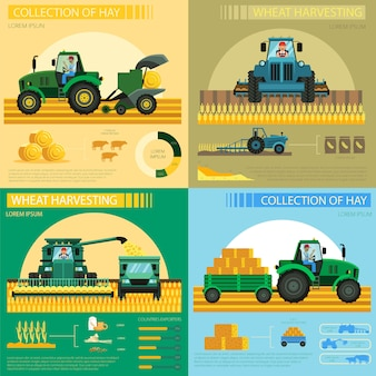 Colección de infografía de cosecha de heno y trigo.