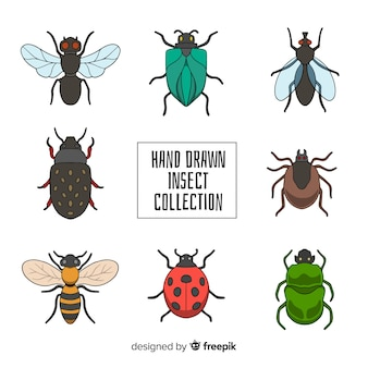Colección insectos coloridos dibujados a mano