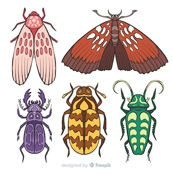 Colección de insectos coloridos dibujados a mano