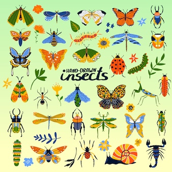Colección de insectos de escarabajos, abejas, mariquitas, mariposas y bichos póster de dibujos animados para ilustración de insectología.