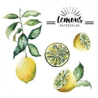 Colección de limones en acuarela