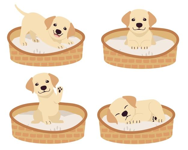 La colección de lindo labrador retriever en la cesta del colchón o la cama para perro en estilo plano.