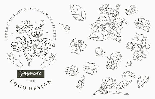 Colección de logo negro jasmine con hojas.