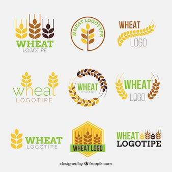 Colección de logos planos de trigo