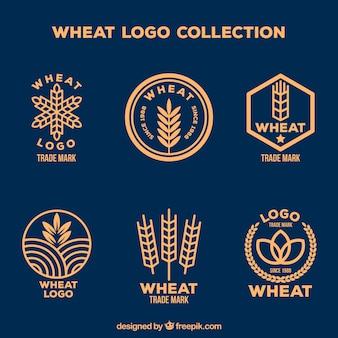 Colección de logos de trigo planos