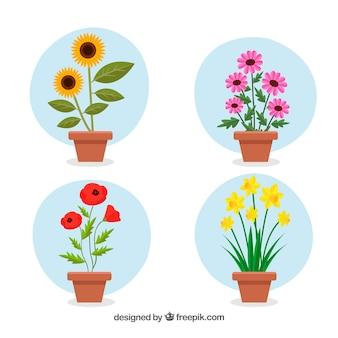 Colección de macetas de flores con diseño plano