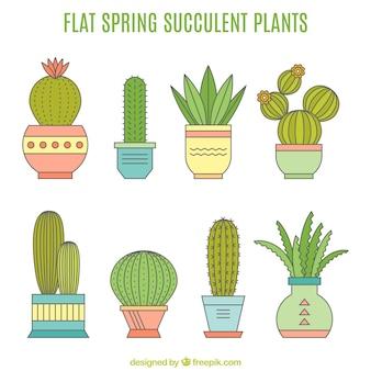 Colección de macetas planas con cactus