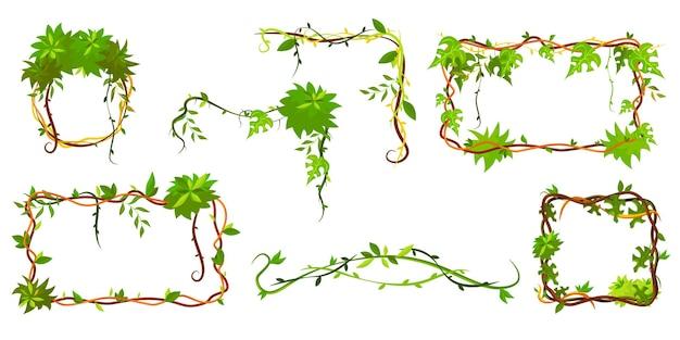 Colección de marco tropical verde. lianas en forma de marco de dibujos animados, ramas de plantas de la selva con hojas