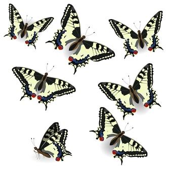 Colección de mariposas. cola de golondrina realista. ilustración de aislado sobre fondo puro.