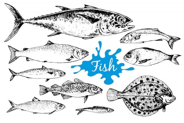 Colección de mariscos dibujados a mano con peces
