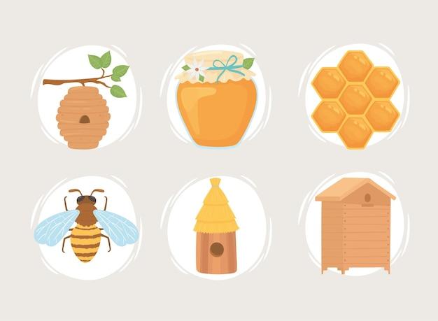 Colección de miel de apicultura