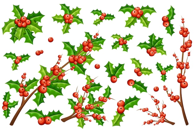 Colección de muérdago navideño. ramas de muérdago con hojas verdes y sin ellas.