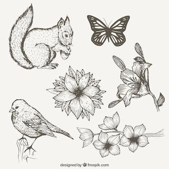 Colección de naturaleza con animales dibujados a mano