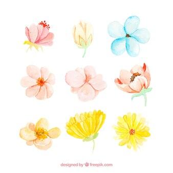 Colección de nueve flores de primavera de acuarela