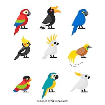 Colección de nueve pájaros tropicales