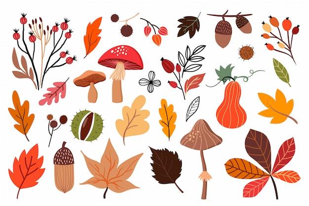 Colección de otoño con diferentes hongos y plantas de temporada.