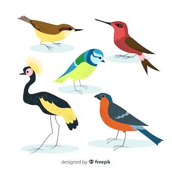 Colección de pájaros coloridos dibujados a mano