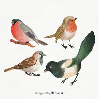 Colección de pájaros estilo acuarela.