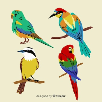 Colección de pájaros exóticos dibujado a mano