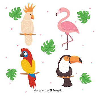Colección pájaros exóticos dibujados a mano