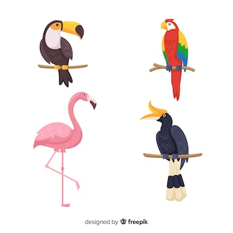 Colección de pájaros exóticos en diseño plano