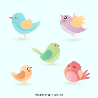 Colección de pájaros planos