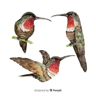 Colección de pájaros realistas acuarelas