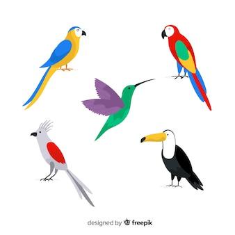 Colección de pájaros salvajes tropicales exóticos