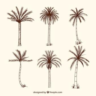 Colección de palmeras dibujadas a mano