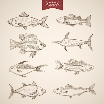 Colección de peces dibujados a mano vintage grabado.