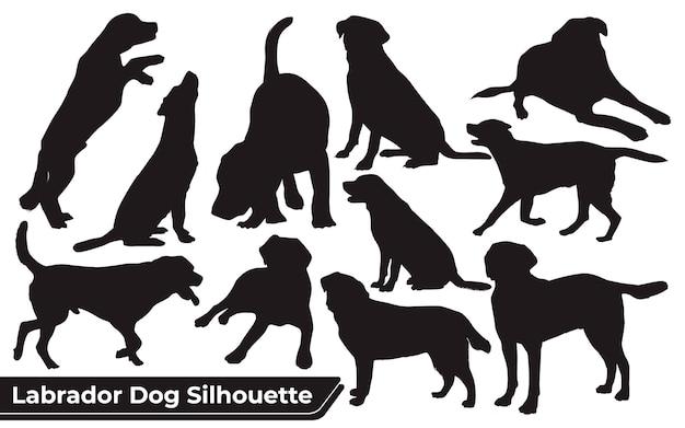 Colección de perro labrador animal en diferentes posiciones.